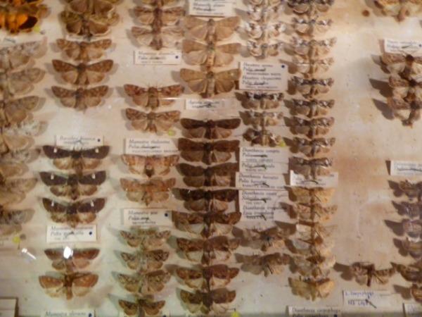 Ben moths