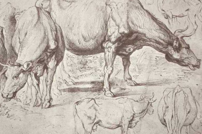 Study of cow herd
