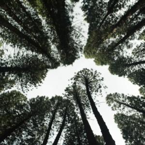 Poet / Tree: Masterclass