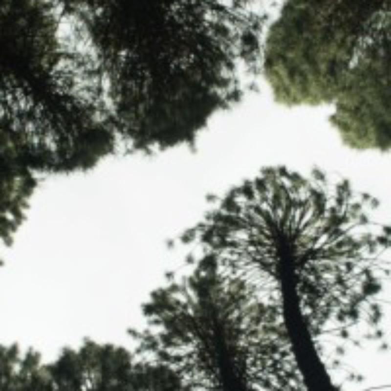 Group logo of Poet / Tree: Masterclass (Summer 2021)